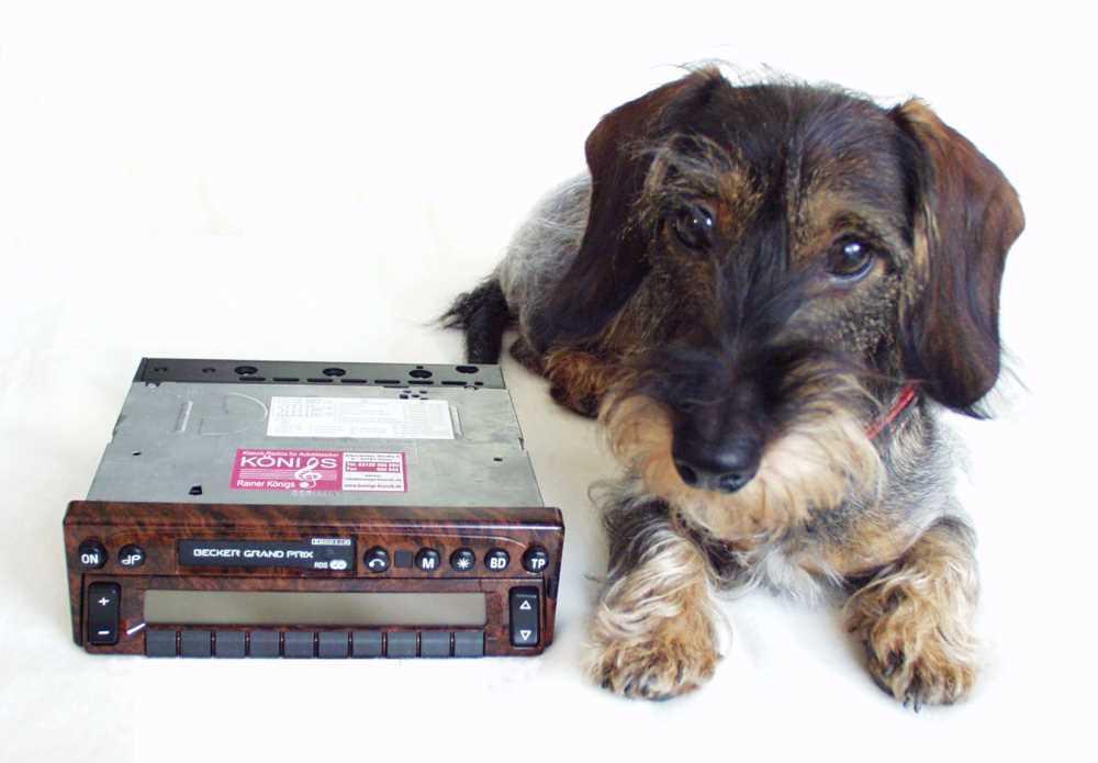 Wir haben tierisch gute Radios .....